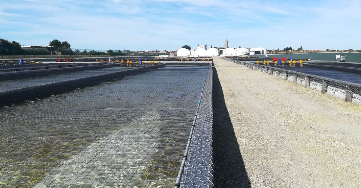 Ferme aquacole de Noirmoutier, élevage de vers marins, Hemarina